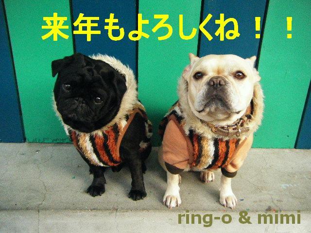 Ringo_mimi_2